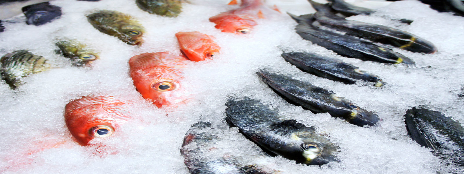 Fish And Meat Cold Storage Frozen Food Cold Room